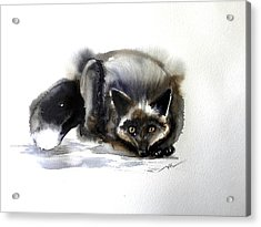 Grey Fox 1 Acrylic Print