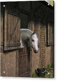 Grey Horse In The Stable - Waiting For Dinner Acrylic Print