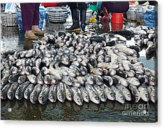 Acrylic Print featuring the photograph Grey Mullet Fish For Sale At The Fish Market by Yali Shi