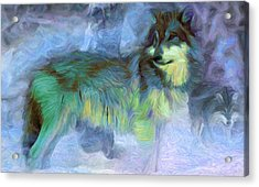 Grey Wolves In Snow Acrylic Print