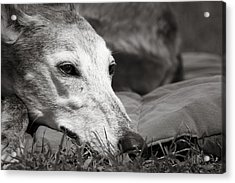 Acrylic Print featuring the photograph Greyful by Angela Rath