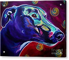 Greyhound -  Acrylic Print by Alicia VanNoy Call