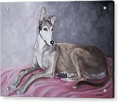 Greyhound At Rest Acrylic Print