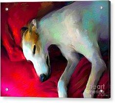 Greyhound Dog Portrait  Acrylic Print