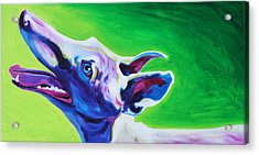 Greyhound - Emerald Acrylic Print by Alicia VanNoy Call