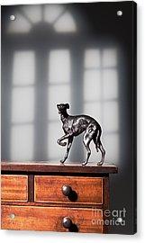 Greyhound Figure In Bronze Acrylic Print by Amanda Elwell