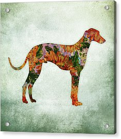 Greyhound Floral On Green Acrylic Print
