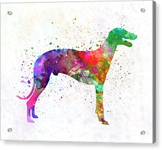 Greyhound In Watercolor Acrylic Print