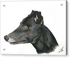Greyhound Acrylic Print by Yvonne Johnstone