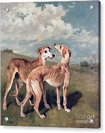 Greyhounds Acrylic Print by John Emms