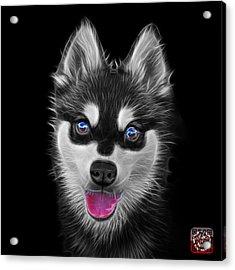 Greyscale Alaskan Klee Kai - 6029 -bb Acrylic Print