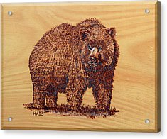 Acrylic Print featuring the pyrography Grizzly 3 by Ron Haist