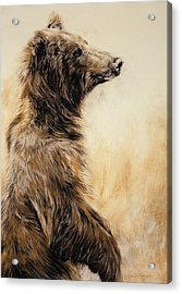 Grizzly Bear 2 Acrylic Print by Odile Kidd