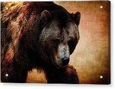 Grizzly Bear Acrylic Print by Judy Vincent