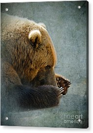 Grizzly Bear Lying Down Acrylic Print by Betty LaRue
