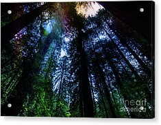 Grizzly Creek Redwood Grove Acrylic Print by Blake Webster