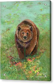 Grizzly In The Meadow Acrylic Print