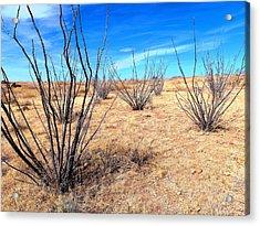 Ground Level - New Mexico Acrylic Print