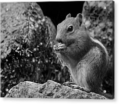 Acrylic Print featuring the photograph Ground Squirrel  by Christina Lihani