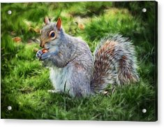 Acrylic Print featuring the photograph Ground Squirrel by Pennie  McCracken
