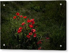 Group Of Poppies Acrylic Print by Svetlana Sewell