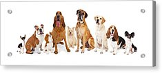 Group Of Various Size Dogs Acrylic Print