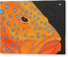 Grouper Head Acrylic Print by Anne Marie Brown