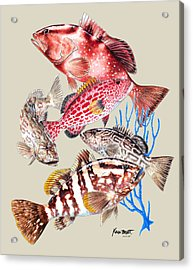 Grouper Montage Acrylic Print by Kevin Brant