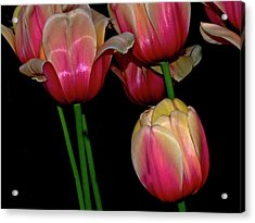 Grouping Ofpink And Yellow Tulips Acrylic Print
