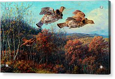 Grouse In Flight Acrylic Print
