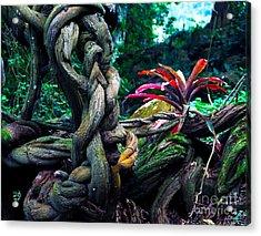 Grow Where You're Planted II Acrylic Print