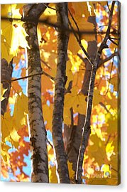 Acrylic Print featuring the photograph Growing Gold - Photograph by Jackie Mueller-Jones