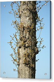 Growing In All Directions Acrylic Print by Magda Levin-Gutierrez