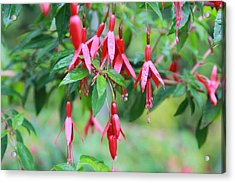 Acrylic Print featuring the photograph Growing In Red And Purple by Laddie Halupa