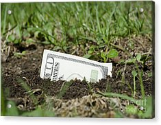 Growing Money Acrylic Print by Mats Silvan