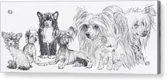 Growing Up Chinese Crested And Powderpuff Acrylic Print by Barbara Keith