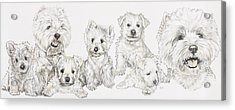 Growing Up West Highland White Terrier Acrylic Print by Barbara Keith