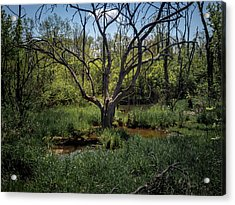 Growning From The Marsh Acrylic Print