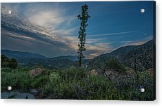 Growth Spurt To The Heavens Acrylic Print by Kenneth James