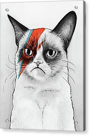 Grumpy Cat As David Bowie Acrylic Print by Olga Shvartsur