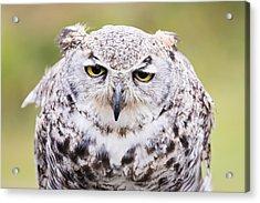 Grumpy Face Acrylic Print