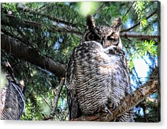 Grumpy Acrylic Print by Lawrence Christopher