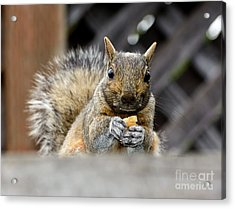 Acrylic Print featuring the photograph Grumpy Squirrel by Susan Wiedmann