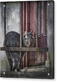 Acrylic Print featuring the photograph Grunge Cat by Kevin Bergen