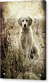 Grunge Puppy Acrylic Print by Meirion Matthias