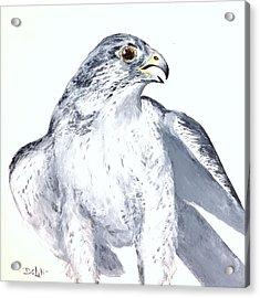 Gryfalcon Portrait Acrylic Print