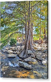 Acrylic Print featuring the photograph Guadalupe River by Savannah Gibbs