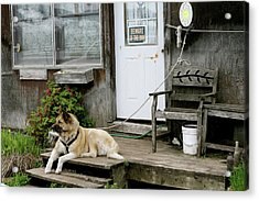 Acrylic Print featuring the photograph Guarded by Brandy Little