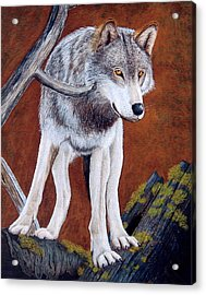 Guardian Of The Den Acrylic Print by Lorraine Foster