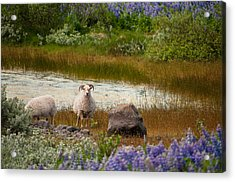 Guardian Acrylic Print by William Beuther